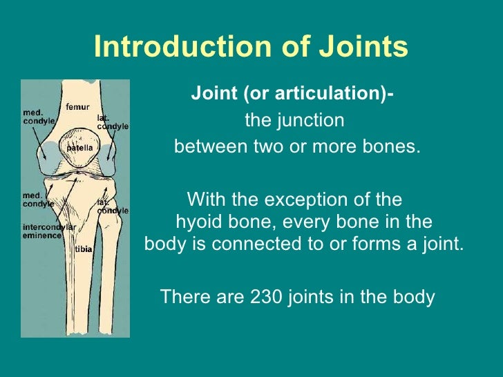 joints powerpoint, Skeleton