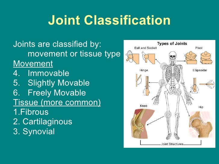 joints powerpoint, Skeleton