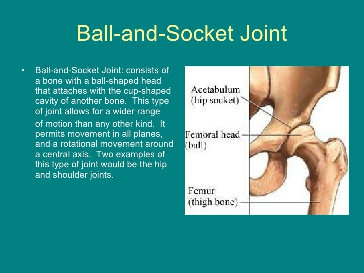 Joints powerpoint