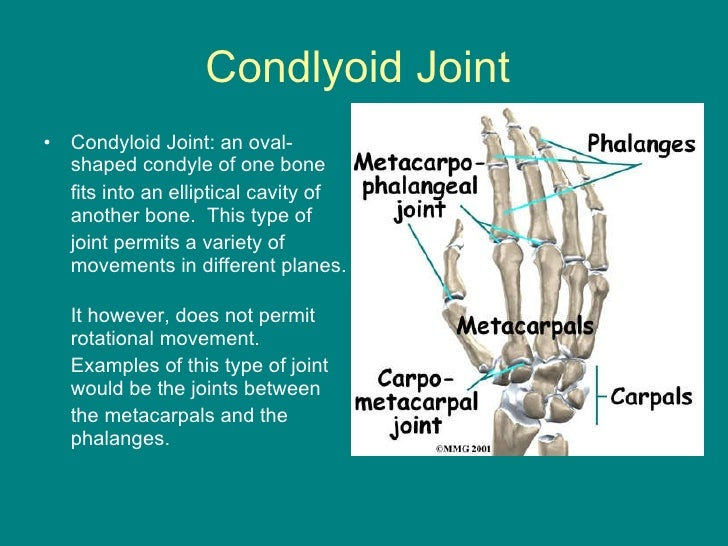joints powerpoint, Cephalic Vein