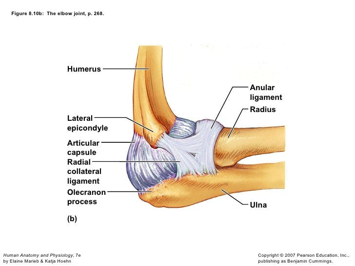 Lateral Ulnar Collateral Ligament Anatomy Choice Image Human Body