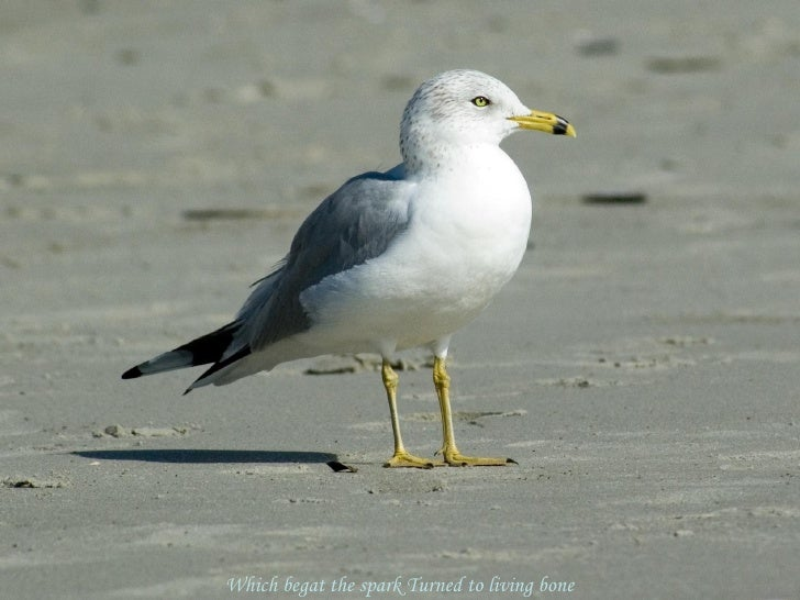 belonging speech jonathan livingston seagull Richard bach, jonathan livingston seagull | highlight, share and discuss this  quote on glose jonathan livingston seagull quotesrichard bach quotesles.