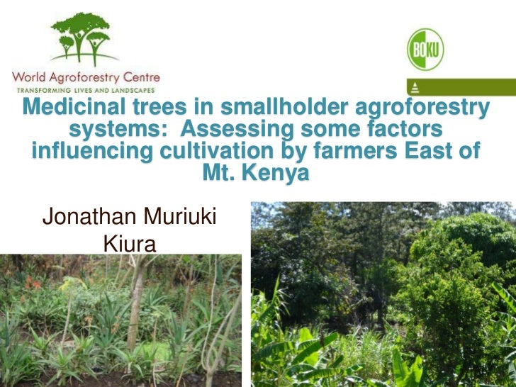 Medicinal trees in smallholder agroforestry systems:  Assessing some factors influencing cultivation by farmers East of Mt...