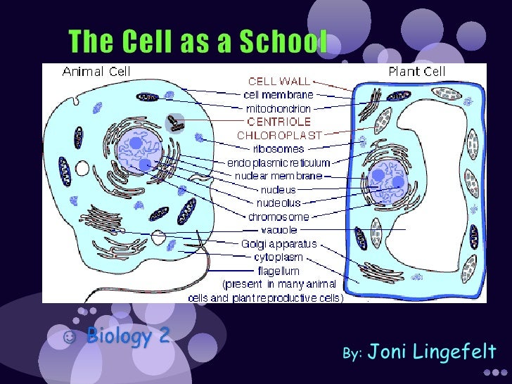 The Cell as a School<br />☺ Biology 2 <br />By: Joni Lingefelt<br />