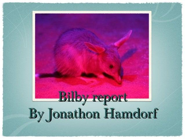 Bilby reportBilby report By Jonathon HamdorfBy Jonathon Hamdorf