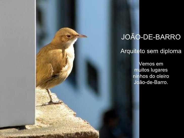 JOÃO-DE-BARRO Arquiteto sem diploma Vemos em muitos lugares ninhos do oleiro João-de-Barro.