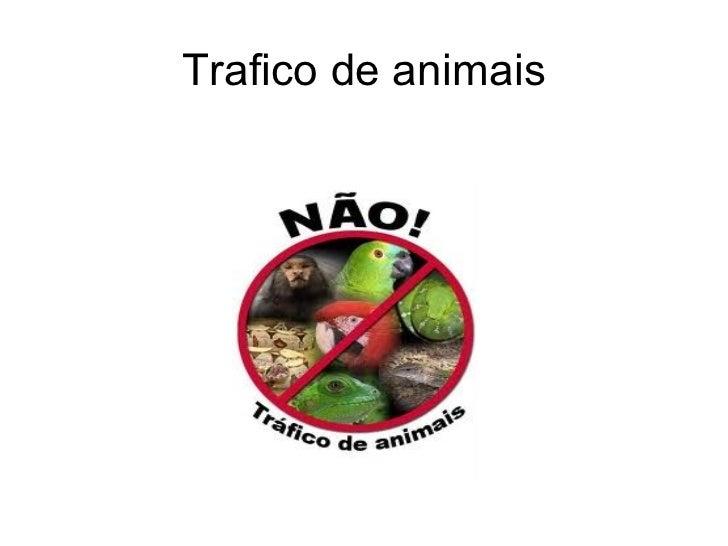 Trafico de animais