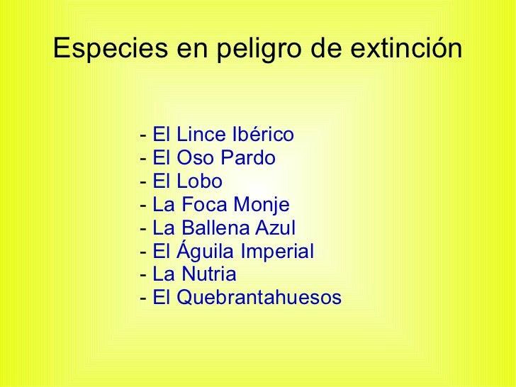 Especies en peligro de extinción -  El Lince Ibérico   -  El Oso Pardo   -  El Lobo   -  La Foca Monje   -  La Ballena Azu...