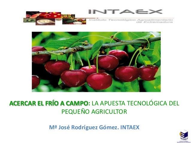 ACERCAR EL FRÍO A CAMPO: LA APUESTA TECNOLÓGICA DEL                PEQUEÑO AGRICULTOR           Mª José Rodríguez Gómez. I...