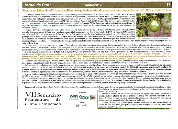 Cultivo protegido mudas maracujá pode aumentar a produtividade em até 50%