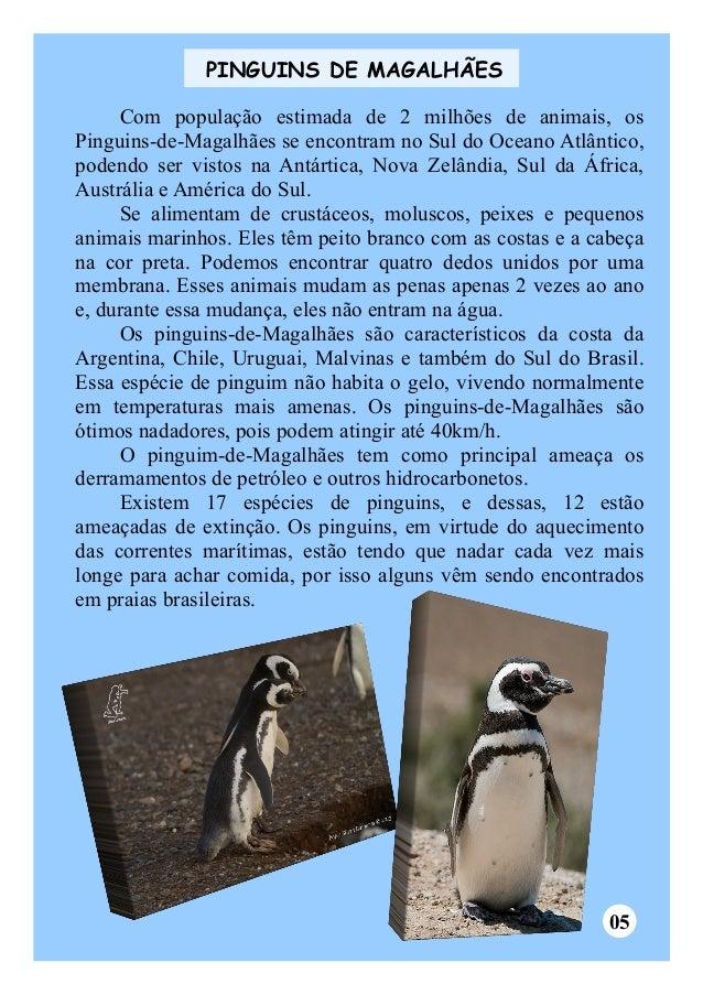 PINGUINS DE MAGALHÃES  Com população estimada de 2 milhões de animais, os  Pinguins-de-Magalhães se encontram no Sul do Oc...