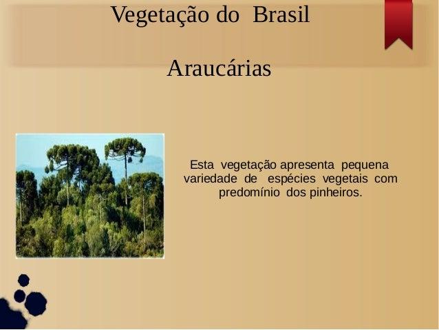 Vegetação do BrasilAraucáriasEsta vegetação apresenta pequenavariedade de espécies vegetais compredomínio dos pinheiros.