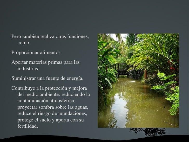 Fuente: http://www.monografias.com/trabajos21/recursos-naturales/recursos-naturales.shtml </li></ul>