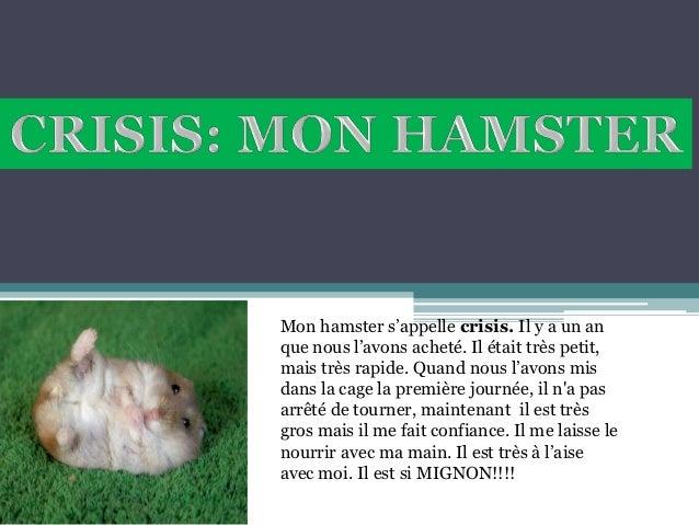 Mon hamster s'appelle crisis. Il y a un anque nous l'avons acheté. Il était très petit,mais très rapide. Quand nous l'avon...