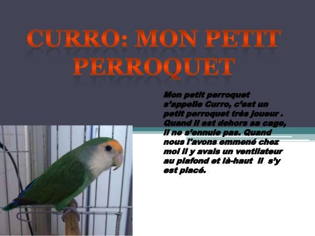 Mon petit perroquets'appelle Curro, c'est unpetit perroquet très joueur .Quand il est dehors sa cage,il ne s'ennuie pas. Q...