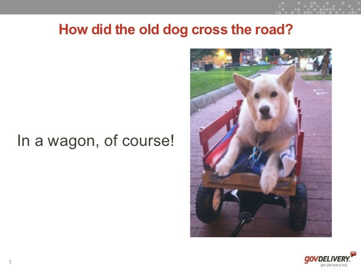 How did the old dog cross the road?    In a wagon, of course!1