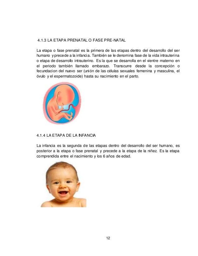 12 4.1.3 LA ETAPA PRENATAL O FASE PRE-NATAL La etapa o fase prenatal es la primera de las etapas dentro del desarrollo del...