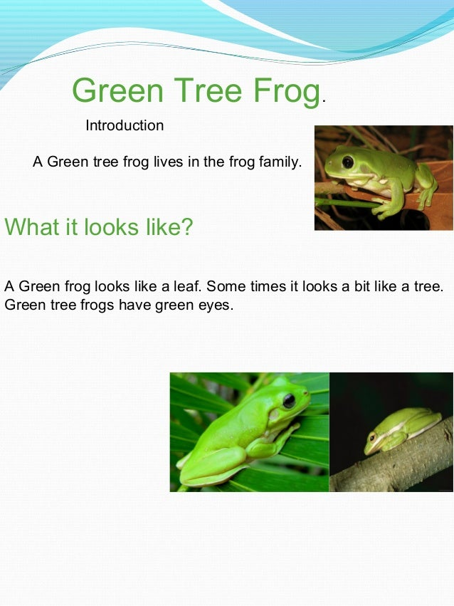 Green Tree Frog. What it looks like? A Green frog looks like a leaf. Some times it looks a bit like a tree. Green tree fro...