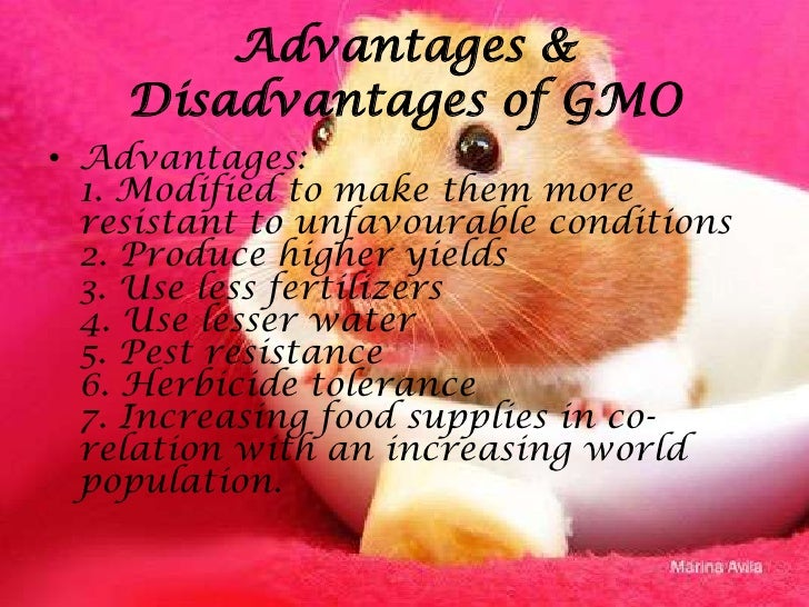 advantages and disadvantages of gmo The process of creating a designer baby is often questioned because of it's shaky moral platform though there are certainly some positive things that can be obtained from the use of genetic engineering used on unborn babies, but it is often wondered if parents will have the right reasons to genetically modify their baby, or.