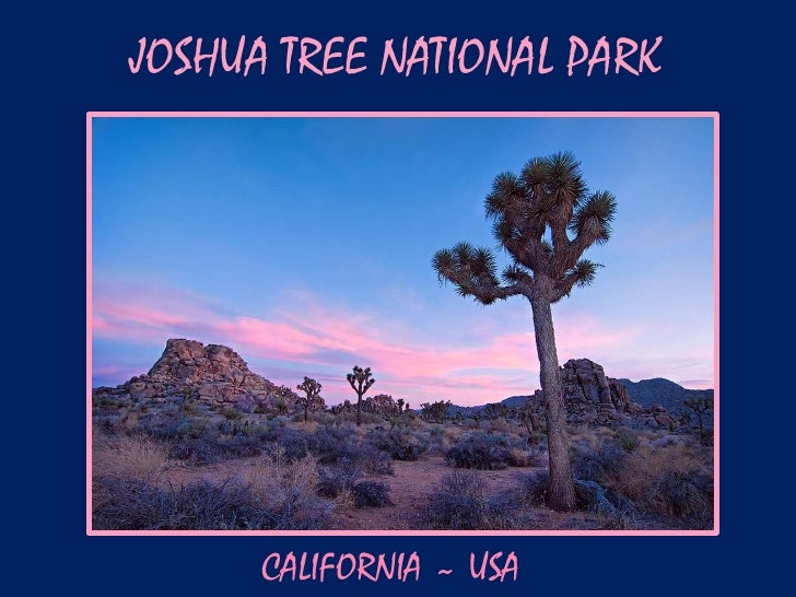 JOSHUA TREE NATIONAL PARK      CALIFORNIA ~ USA