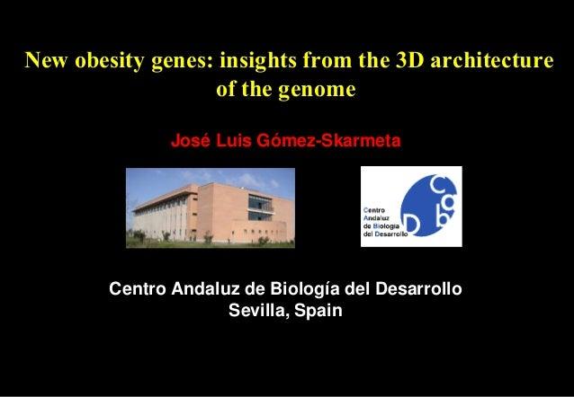 New obesity genes: insights from the 3D architecture of the genome José Luis Gómez-Skarmeta Centro Andaluz de Biología del...