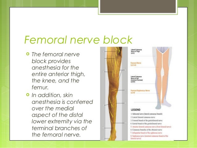ultrasound guided peripheral nerve blocks, Muscles