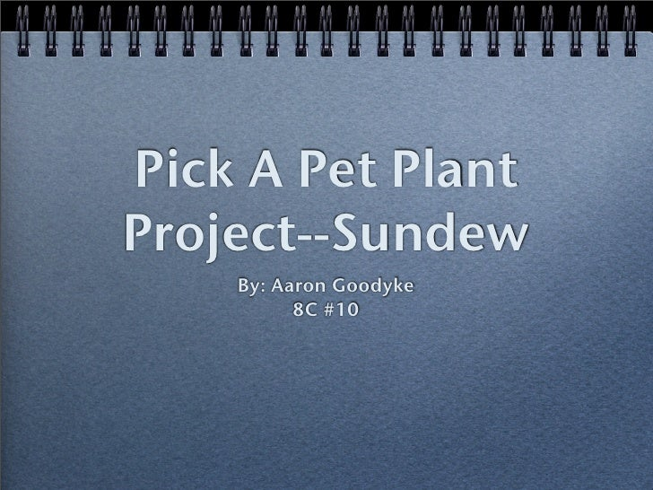 Pick A Pet Plant Project--Sundew     By: Aaron Goodyke           8C #10