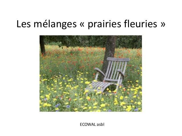 Les mélanges « prairies fleuries » ECOWAL asbl