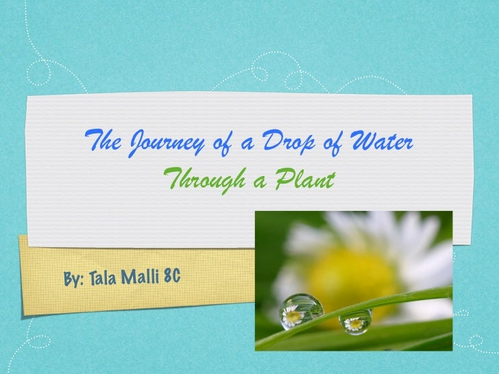 The Journey of a Drop of Water          Through a PlantBy: Ta la M a ll i 8C