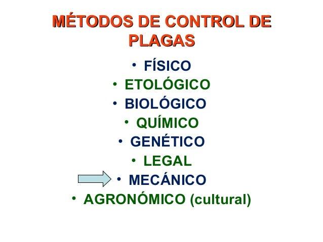 Control mec nico de plagas for Control de plagas badajoz