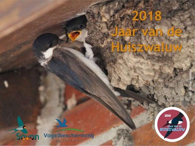 2018 Jaar van de Huiszwaluw Foto:BertusWebbink