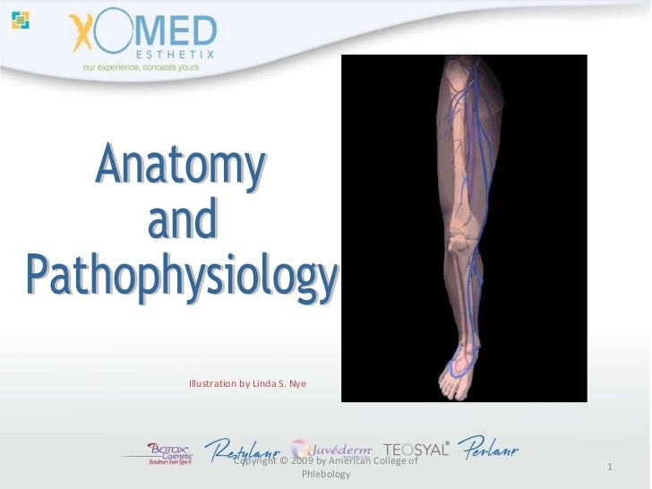 Copyright © 2009 by American College of Phlebology Illustration by Linda S. Nye Anatomy  and  Pathophysiology