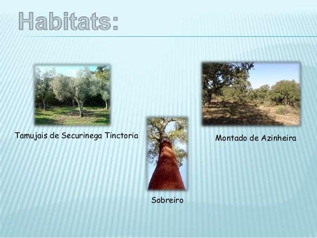  O Parque é também marcado pelos valores do património histórico e cultural, em queressaltam os vestígios do neolítico e ...