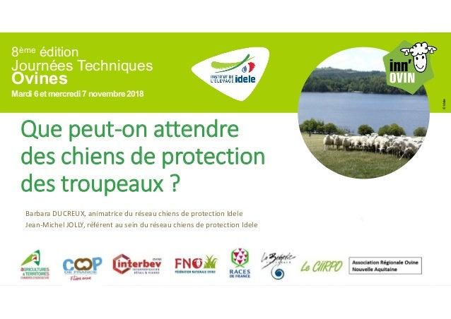 8ème édition Journées Techniques Ovines Mardi 6 et mercredi7 novembre2018 ©Idele Que peut-on attendre des chiens de protec...