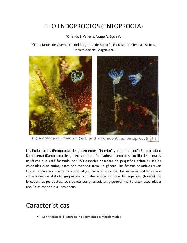 FILO ENDOPROCTOS (ENTOPROCTA) 1 Orlando j. Vallecía, 2 Jorge A. Eguis A. 1,2 Estudiantes de V semestre del Programa de Bio...