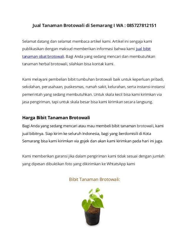 Tempat Jual Brotowali Di Semarang I Wa 085727812151