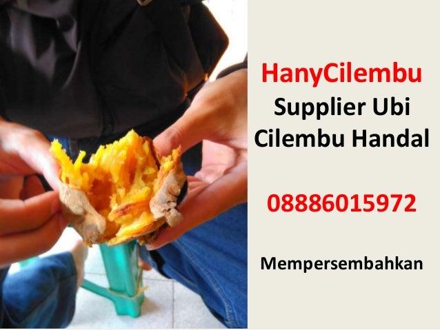 HanyCilembu Supplier Ubi Cilembu Handal 08886015972 Mempersembahkan