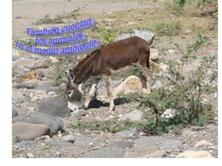 También cuentan los animales en el medio ambiente