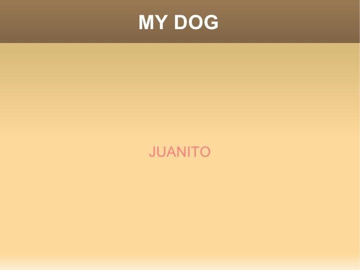 MY DOG JUANITO