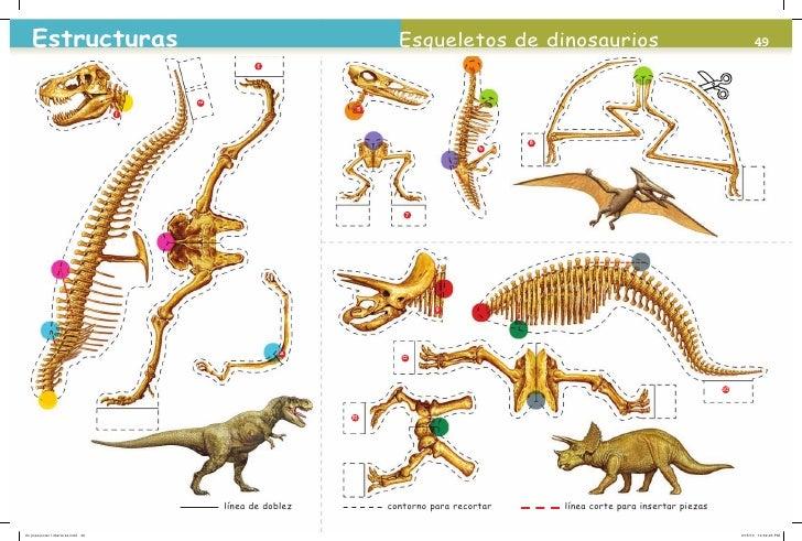 Esqueleto De Dinosaurio Para Armar