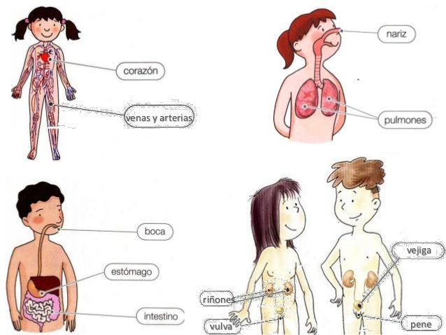 Juegos partes del cuerpo humano (1) aprendizaje