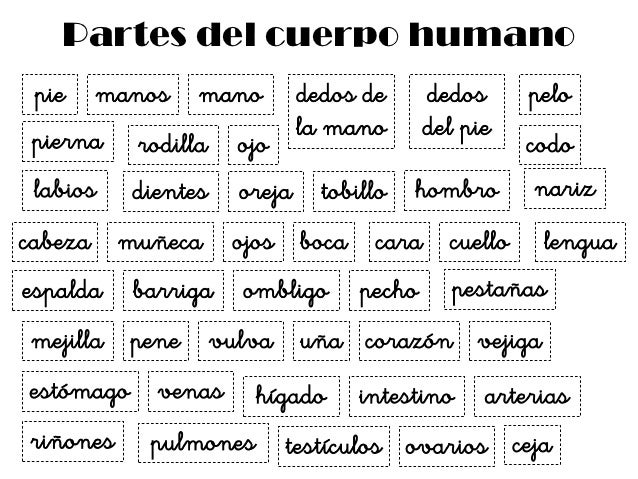 Juegos partes del cuerpo humano (2) asociacion