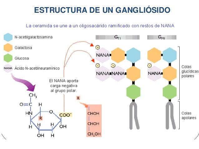 hormonas esteroides sintesis