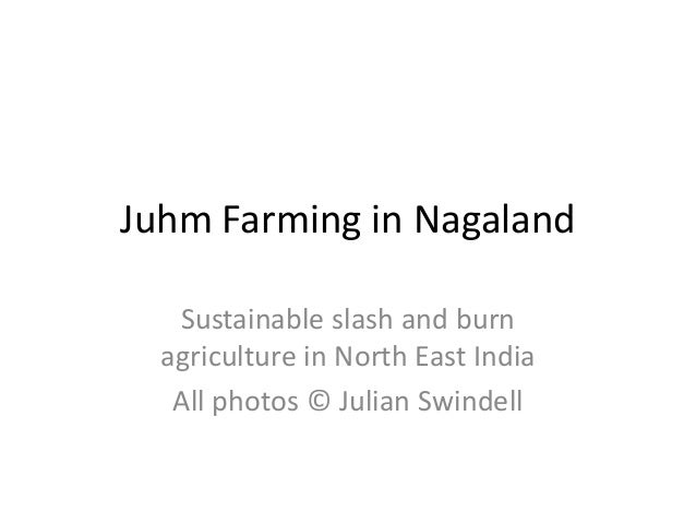 Juhm Farming in Nagaland   Sustainable slash and burn  agriculture in North East India   All photos © Julian Swindell