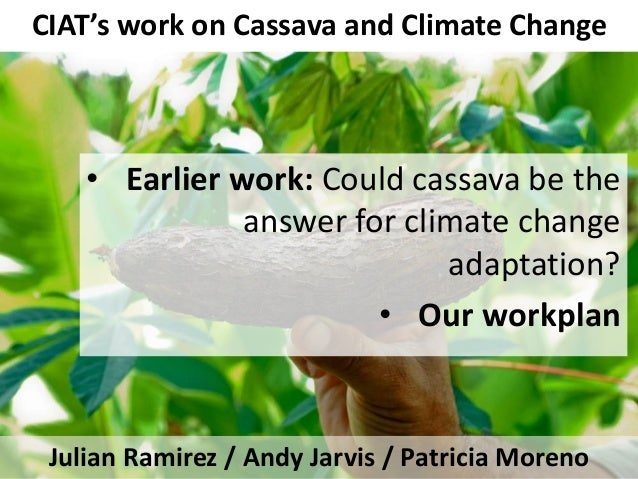 CIAT's work on Cassava and Climate Change Julian Ramirez / Andy Jarvis / Patricia Moreno • Earlier work: Could cassava be ...