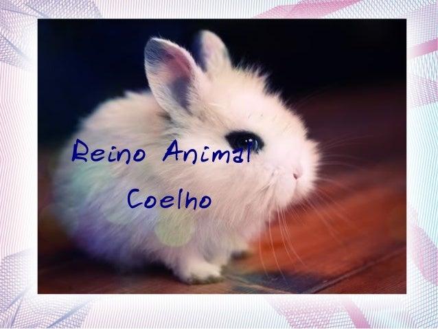 Reino Animal Coelho