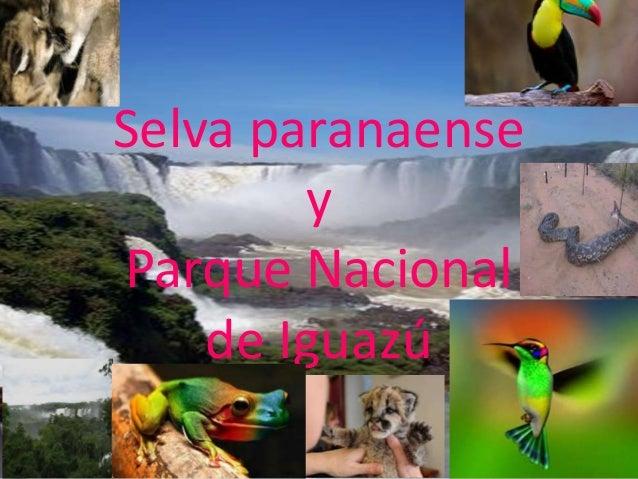 Selva paranaense y Parque Nacional de Iguazú