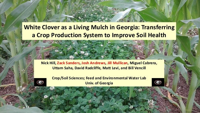 White Clover as a Living Mulch in Georgia: Transferring a Crop Production System to Improve Soil Health Nick Hill, Zack Sa...