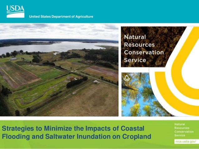 Strategies to Minimize the Impacts of Coastal Flooding and Saltwater Inundation on Cropland