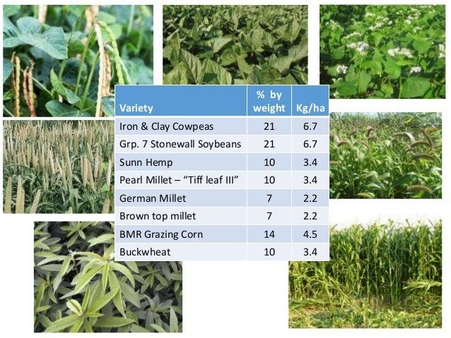 """Variety % seeds Kg/ha Iron & Clay Cowpeas 14 24 Pearl Millet – """"Tiff leaf III"""" 82 7.0 Okra 4 3.3 Crop %CP %ADF %NDF %TDN R..."""